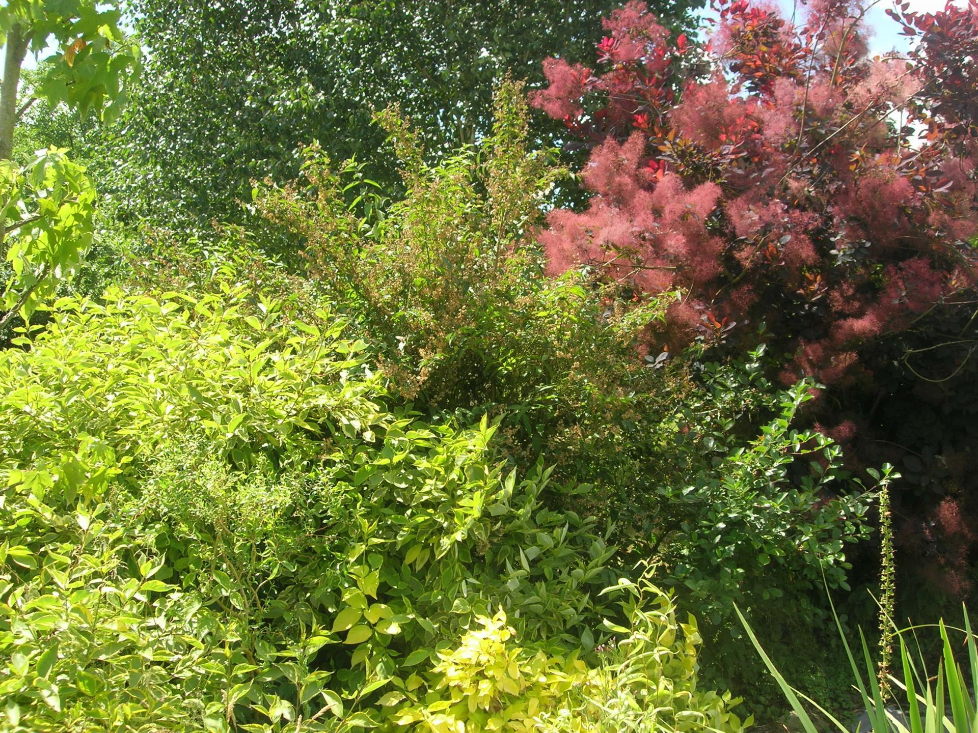 Que Faire Au Jardin En Janvier a faire au jardin en janvier - les arbres et les arbustes